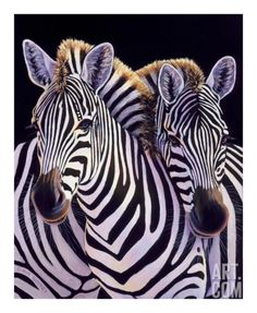 MOONCRESIN Diamond Mosaic Brother A Zebr Diamond Embroidery Needlework Diy Diamond Painting Cross Stitch Decoration Stickers Zebra Painting, Zebra Art, Large Animals, Animals And Pets, Cute Animals, Colorful Animals, Beautiful Creatures, Animals Beautiful, Animals Amazing