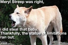 Finally, an honest dingo.