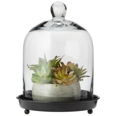 "Target Smith & Hawken® Glass Dome Cloche - 8.8x11.5"" $29.99 Small (for a single rose)"