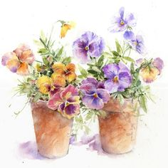 Pansies and Terracotta Pots - Rose Eddington