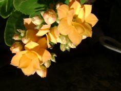 tinny yellow
