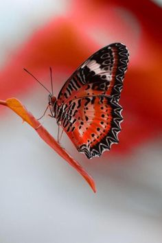 """chasingrainbowsforever: """"Butterfly """" ♥"""