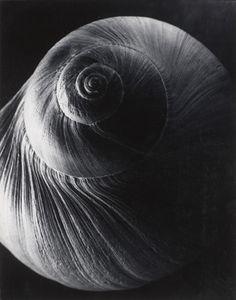 Edward Steichen The Spiral Shell - 1921 Edward Steichen, Edward Weston, Alfred Stieglitz, History Of Photography, Art Photography, Straight Photography, National Gallery Of Art, Art Gallery, Design Process Steps