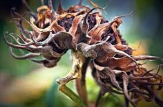close up nature photography - Google Search