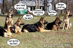 GSD thoughts _ don't be an unwelcome guest on the farm