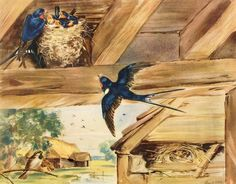 The Swallows in the Barn.  Nature plates, illustrated by Eileen A. Soper  From The Enid Blyton Nature Readers, 1945 -46