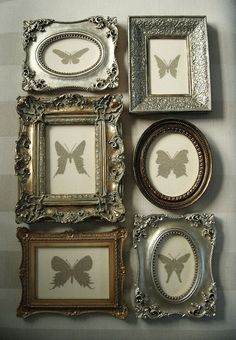 Butterfly collection.