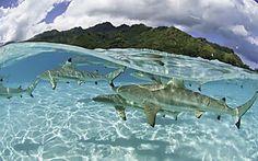 19 Blicke unter die Meeresoberfläche, die sprachlos machen