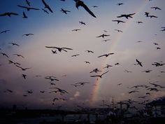 """Rainbow (Some rights reserved by Tolga """"Musato"""") 