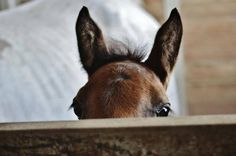 Its Friday time to spend the weekend with your best friend!  #Friday #HorseHangs #BestFriend