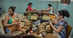 Mulheres preparam folhas de tabaco fábrica de charutos H. Upmann de Havana