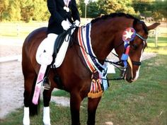 http://www.tradehorses.com - NAJYRC Champion Offered for Sale, Dutch Warmblood, Gelding, 12 years old