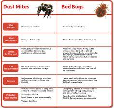 Dust Mites versus Bed Bugs