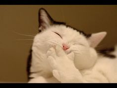 Funny Cat Videos Part 2 HD 720p - http://movies.chitte.rs/funny-cat-videos-part-2-hd-720p/