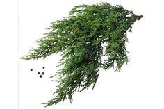 How to Propagate Cedar Trees (6 Steps)   eHow