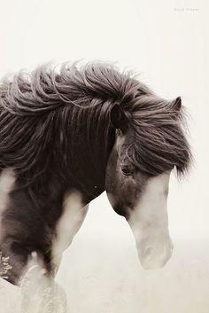 stallion xbyGígja Einars