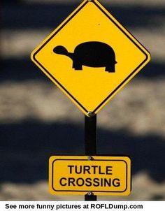 Turtle on the road #meme #funny #animal #lol