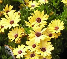 List of Perennials which Bloom all Year | Orchid Flowers
