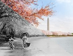 Cherry Blossoms, 1925 — Dynamichrome Viewfinder — Medium