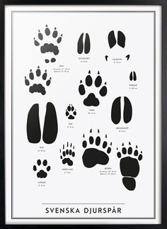 Svenska Djurspår - New edition! Abc Poster, Groups Poster, Poster Wall, Poster Prints, Baby Room Wall Art, Monogram Cake Toppers, Animal Tracks, Black And White Posters, Eco Friendly Paper