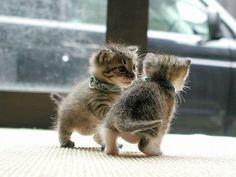 kitten friends.