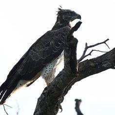 Abelana Game Reserve (@abelanagamereserve) • Instagram photos and videos Game Reserve, Bald Eagle, Bird, Photo And Video, Videos, Photos, Animals, Instagram, Pictures