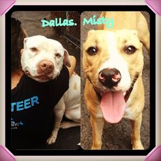URGENT!!!  So sad...two of my favorite dogs will be PTS in a hour or so...Always the optimist...please share one last time for me. Both are located in NYC. Manhattan Animal Care & Control