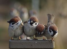 Nature Animals, Animals And Pets, Cute Animals, Bird Pictures, Animal Pictures, Beautiful Birds, Animals Beautiful, Wild Creatures, Colorful Birds