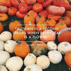Autumn is a second spring when every leaf is a flower. #autumn #fall #september #leaves #pumpkins