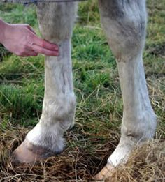 Learn how to take your horse's vitals