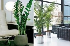 Resultado de imagem para plantas para decorar cozinha
