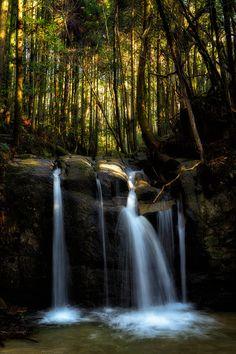 「猿投山の中腹を流れる広沢川には小規模な滝が連続する。その一つの二つ釜滝。樹林帯に朝陽が射し込むとオレンジに輝く。そのタイミングを待って撮影した」(2014/...|ハンドメイド、手作り、手仕事品の通販・販売・購入ならCreema。