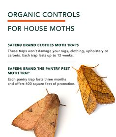 Moth Problem Check Out Our Organic Solutions