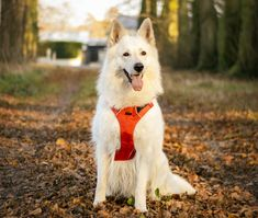 PawTrails gives you insights into your pet's daily life with its All in One Smart Solution. Dog Harness, Biodegradable Products, Your Pet, Husky, Corgi, Pets, Life, Animals, Corgis