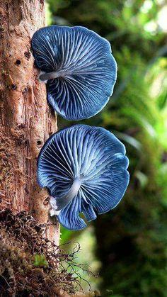 Setas azul