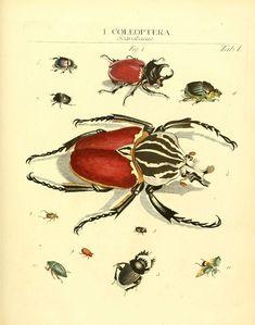 https://flic.kr/p/ac1GcF | n318_w1150 | Dr. Sulzers Abgekürtze Geschichte der Insecten Winterthur :Bey H. Steiner ...,1776. biodiversitylibrary.org/page/11635485