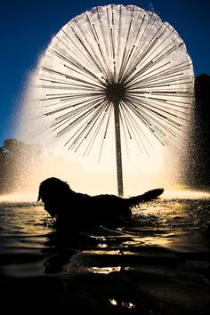 """The Gus S. Wortham Memorial Fountain, dubbed """"the dandelion fountain"""" by locals, was built in Buffalo Bayou Park in 1978. It was designed by Houston architect and Rice University professor William T. Cannady, who was inspired by a similar fountain he saw in Australia. Multiple lacquer-coated bronze pipes jut out of the fountain's core, spewing water in all directions. The pipes are all of equal length, a construction that gives the fountain its spherical shape."""