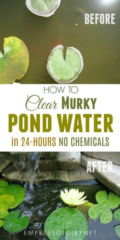 pond landscaping Murky pond water This simple trick is a chemical-free way to clear up murky water in small garden ponds within hours and keep it that way. Ponds For Small Gardens, Small Ponds, Small Fish Pond, Garden Pond Design, Landscape Design, Landscape Plans, Bog Garden, Garden Site, Pond Cleaning