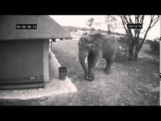 Good Elephant throw trash away, If Elephants Can Do It Then Why Can't We?