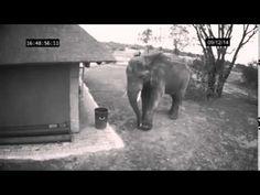 A good elephant throws trash away.