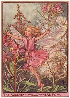 Rose-bay Willow-herb Fairy by Cicely Mary Barker. Wayside... https://www.amazon.com/dp/B017WAAKV4/ref=cm_sw_r_pi_dp_x_IX1vzbSNBKR16