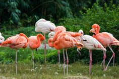 Strange Facts about the Most Beautiful Bird on Earth Flamingo  Pouted Online Magazine  Latest Design Trends Creative Decorating Ideas Stylish Interior Designs  Gift Ideas