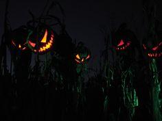 PUMPKINROT.COM: What's Brewing: Halloween 2010. Cool Halloween Blog
