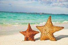 Starfish On Tropical Caribbean Beach