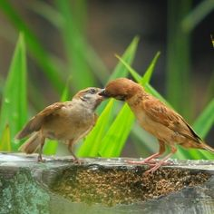 French Kiss - 10Nature | The Best Nature Photography