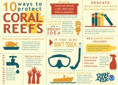 Things you can do to protect coral reefs #infographic #ProjectAWARE