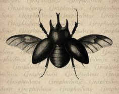 antique illustration scarab beetle - Google Search