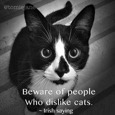 Beware of people that dislike cats. ~ Irish saying. in memory of Annie, Born in UK, then lived her first year in Ireland, before immigrating to the US!