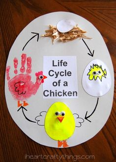 Kids will love this hands on learning experience by creating a Life Cycle of a Chicken Craft from iheartcraftythings.com