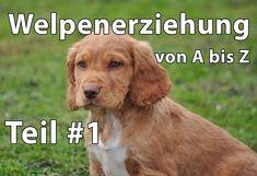 Welpenerziehung http://www.hundeerziehung-hundepension.de/welpenerziehung-ohne-stress Welpenerziehung Die Welpenerziehung beginnt mit dem Tag, an dem der Hun...